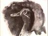 golova_utki_do_1917.jpg